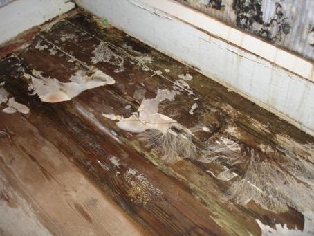 Merule : Sur les parties boisées d'une habitation, la mérule cause des dommages inimaginables