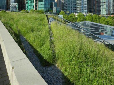 Tout savoir sur la pose d'une toiture végétalisée