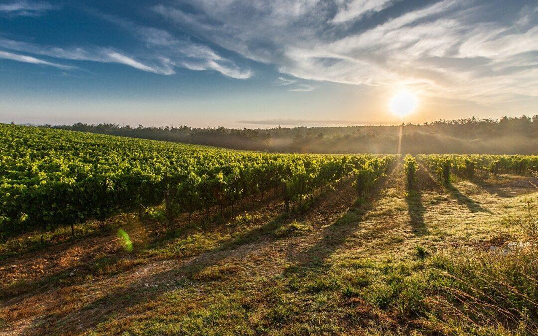 Achat terrain agricole : Les 5 façons de transformer votre rêve en réalité
