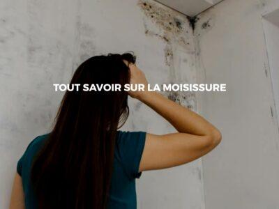Éliminer les moisissures de vos murs avec des solutions durables